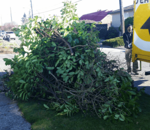 Yard Waste Removal in Seattle by Seattle Rubbish Removal
